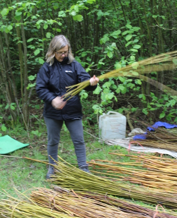 Choosing willow for an obelisk