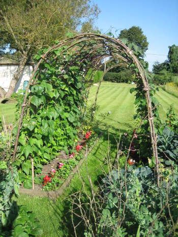 A tunnel build from our hazel, covered in runner beans during July