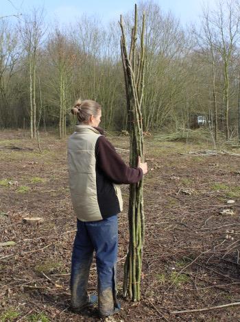 Hazel bean poles - around 7 feet (2.4m) long