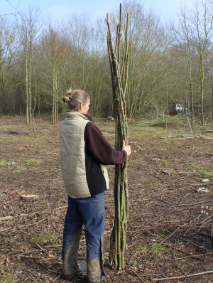 Hazel bean poles - around 7 feet (2.4m) long