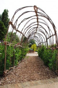 Hazel and willow tunnel