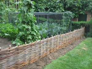 One of two, 7m in-situ fences to create a border to a vegetable garden
