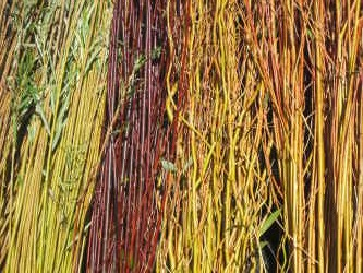 Willow stems look great in a vase especially in winter when natural colours are rare