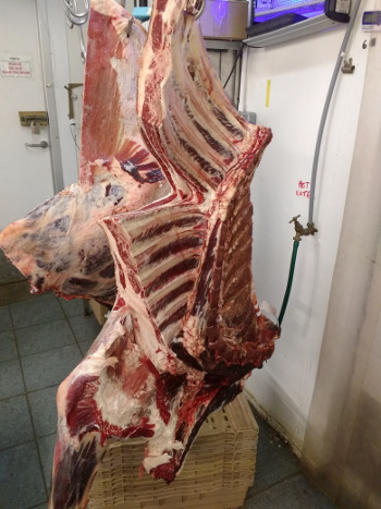 Beef during cutting