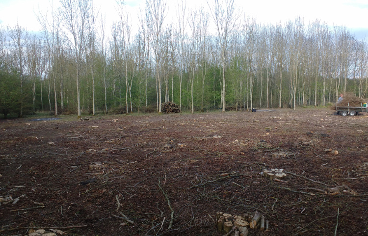 Second plot in spring 2017. Tidy and ready to leave. Wassledine coppicing