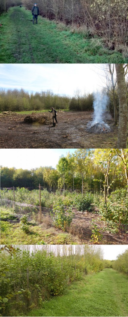 Coppicing at Centenary Wood - (top-bottom) day 1, January 2016; Tidying the first coupe, April 2016; First year's regrowth, September 2016; Two year's growth, October 2017