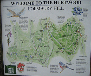Map of the Hurtwood, Holmbury Hill, Surrey