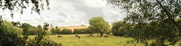 Red Polls graze the Wassledine pastures (image Barry Halton)