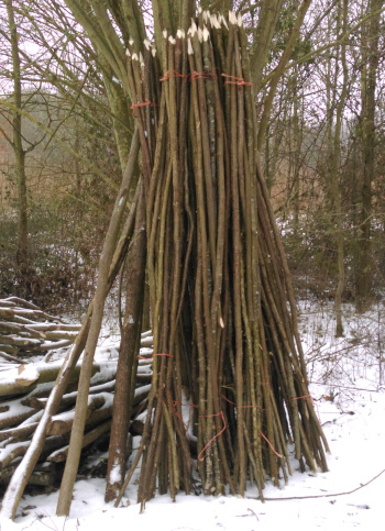 "Hazel bean poles, 230cm (7'6""), pointed"