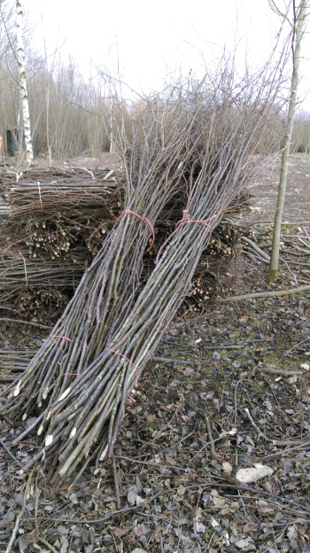 Hazel hedge binders ready for collection. From Wassledine