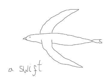 Hurrah for swifts