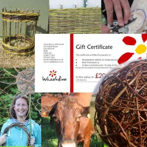 A gift certificate from Wassledine - the perfect gift