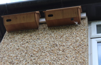 Swift boxes under our eaves with tiny loudspeaker attached