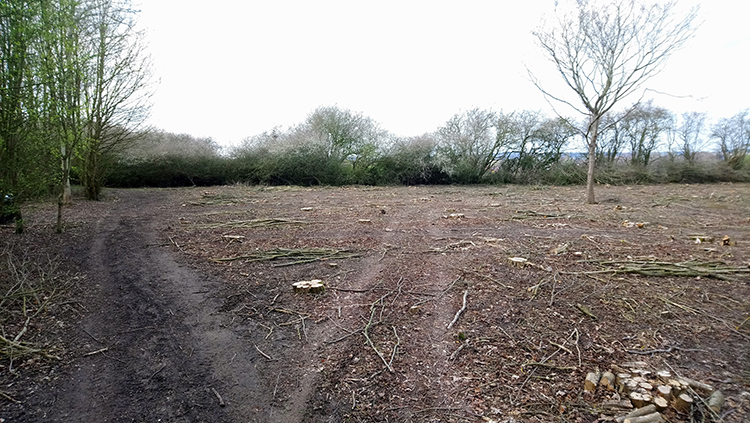 Centenary Wood seen from more or less the same spot, March 2019. Wassledine, hazel coppice