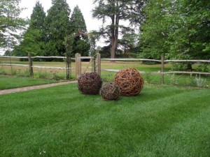 Three willow balls in a customer's garden