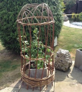 A willow cloche made to protect a blueberry plant from birds