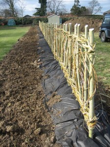 A living willow fence