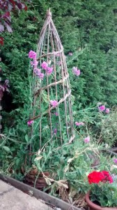 Obelisk and perennial sweet peas