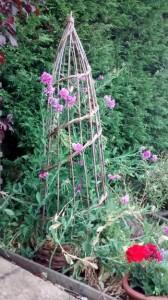 Obelisk and perennial sweet peas